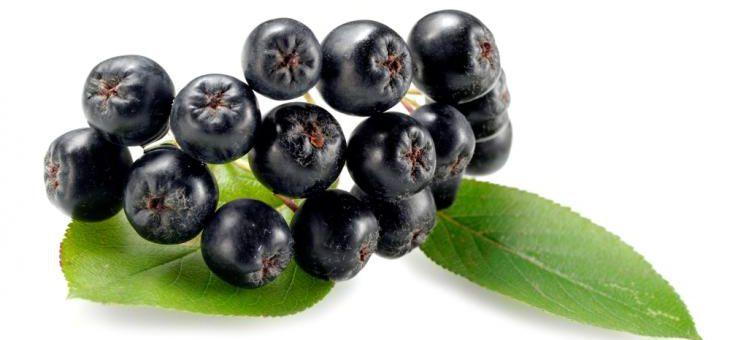 Článek Arónie - Černý jeřáb, královna antioxidantů