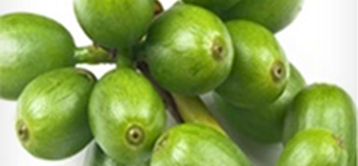 Článek Je Zelená káva prospěšná? Ano či ne?